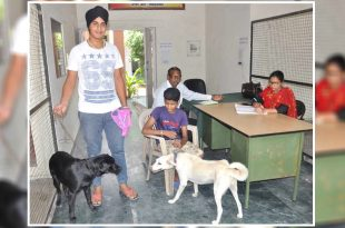 Pet Dogs Registration in Amritsar