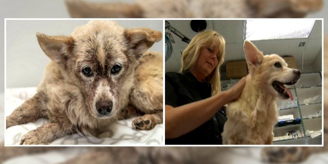 Vets Save A Dog Infested With 100,000 Fleas