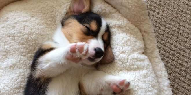 Facts About a Dog's Paw