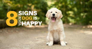8 Signs Your Dog Is Happy