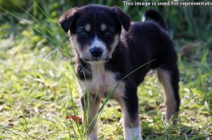 Man Accused Of Raping Female Puppy