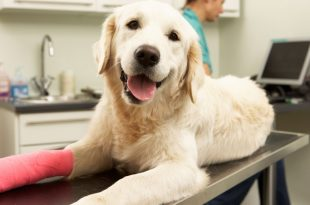 Pet Insurance Now In India Too