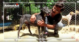 Hairless Stray Dog Rescued By AAU