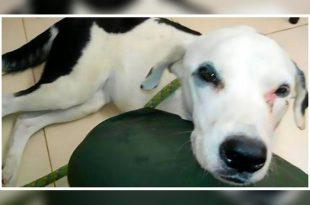 Dog dies of broken heart