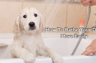 How To Bathe Your Dog More Easily