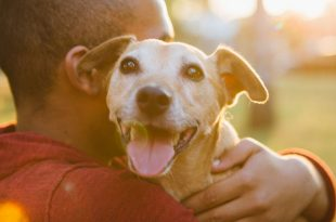 pet dog keep you healthy