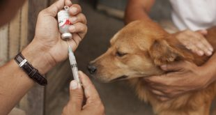ANTI-RABIES VACCINATION OF DOGS