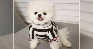 Latest winter fashion for dogs