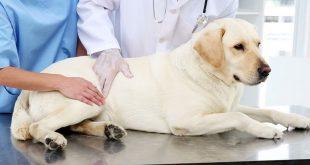 Canine Paralysis Symptoms