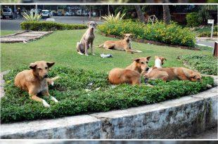 Stray Dog Menace