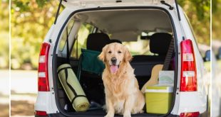 Travelling with dog