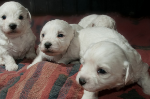 Ban On Pet Shops Selling Puppies