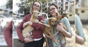 Foreginers adopted stray dogs from India