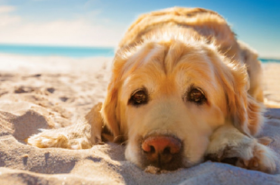 Keep Your Dogs Cool In Dubai