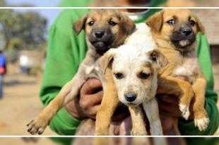 12 Puppies killed
