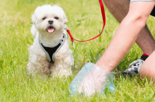 Collecting dog poop