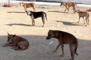 Cruel treatment of stray dogs