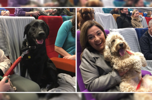 Dog friendly cinema in Ireland