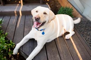 Pet dog registeration