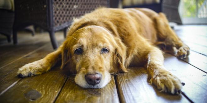 Dog Skin Cancer Natural Options That Work Dogexpress
