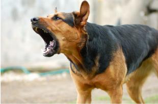 stray dog bite