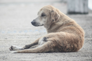 Remove stray dogs from campus