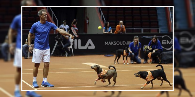 ball dogs at brazil