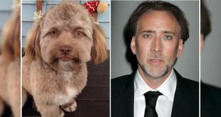 dog having a human face