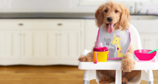Summer food for dogs