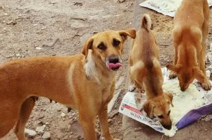 Feed Stray dogs