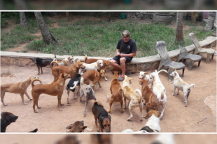 British couple takes care stray dogs