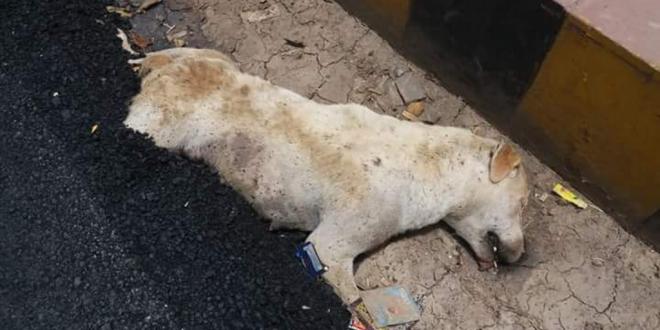A Dog Buried Alive