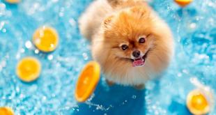Dog love water