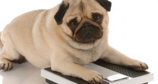 Dog weight loose