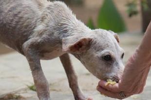 Feeding stray dog