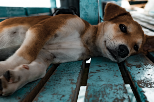 11 Dogs Die In A Van