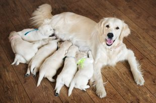 6 Best Ways To Improve Dog Milk Production