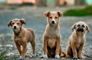 Adopt stray dog