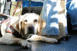 Ban Pets On Buses