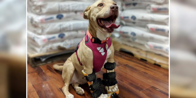 National Feed A Rescue Pet Week