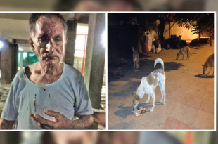 Ex-Soldier Beaten Up For Feeding Stray