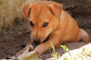 stray dog rescue from well