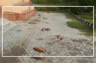 7 Puppies killed