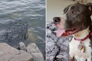 Dog abandoned in US