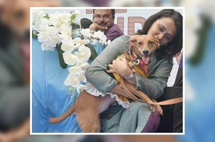 Indian dog breed at dow show