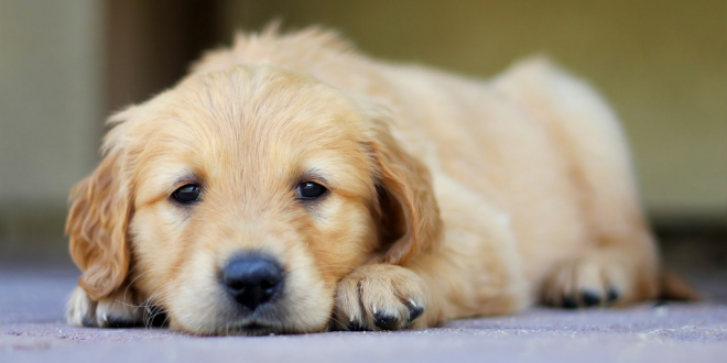 Sleeping disorder in dogs