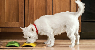 healthy food for dogs