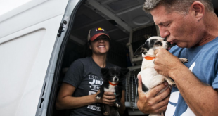 100 Dogs Rescued From Puppy Mills In The US