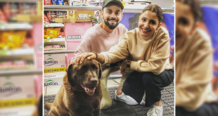 Virat and Anushka Love for dogs
