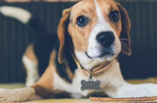 Study Show Dogs Can Sense Bad People